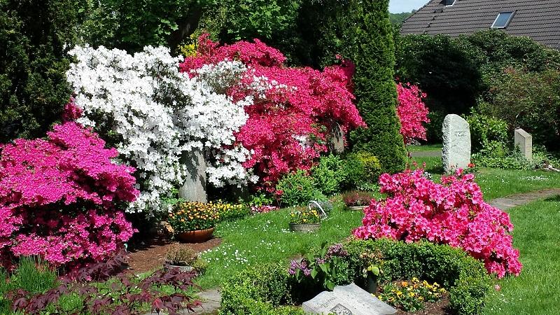 Friedhof Heiligenhaus Blumen