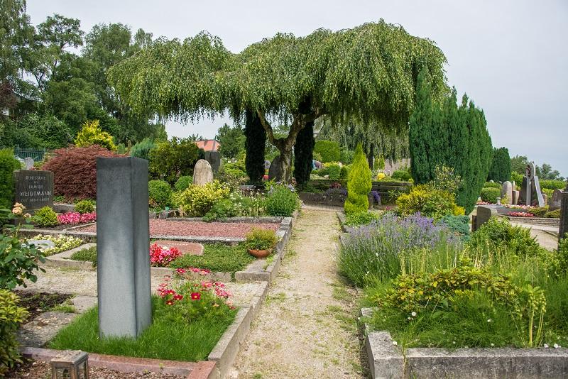 Friedhof Homberg Trauerweide